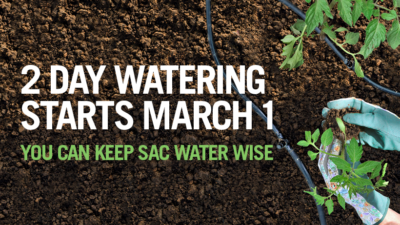 2 Day Watering Starts March 1