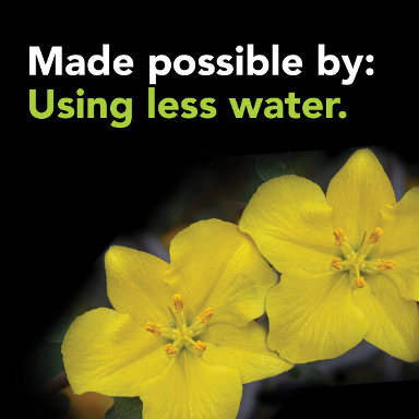 Water conservation - a yellow flower