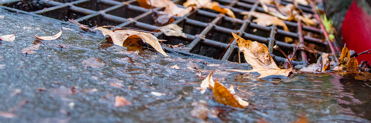 A few leaves surround a Sacramento city gutter as water slow pours in.