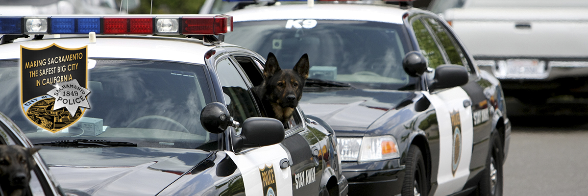 SPD K9 in police vehicle