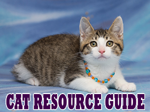 Cat Resource Guide