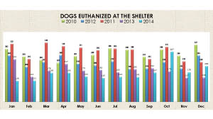 dogs euthanized