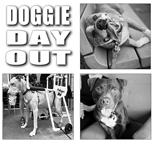 Doggie Day Out Program