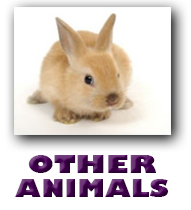 Other Animals Picture