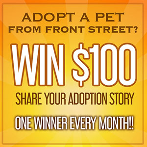 Share Your Adoption Story Front Street Animal Shelter