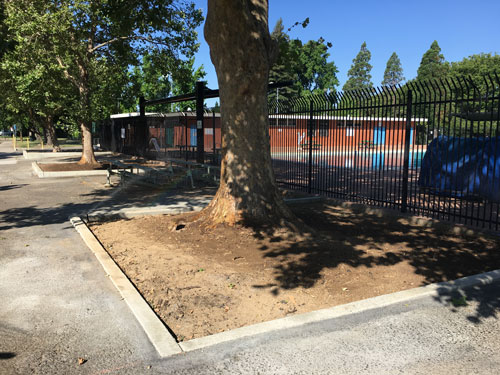 Glenn Hall Park Tree Expansion project complete.