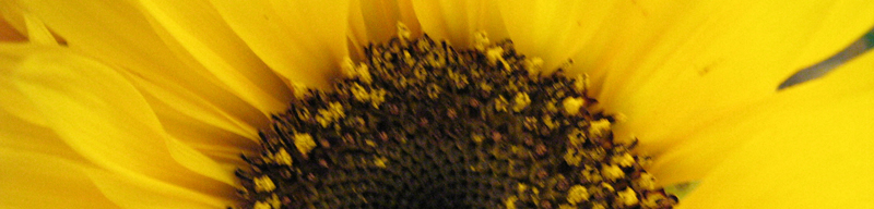Summer Calendar Banner - Sunflower by Karen Armstrong