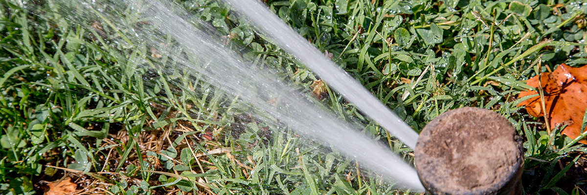 Sprinkler shoots out water over grass.