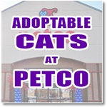 Adoptable Cats Petco Arden Way