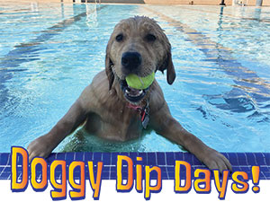 Doggy Dip Day!